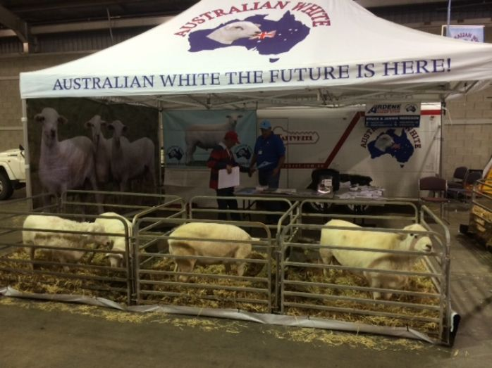 Australian White Sheep Breeders Association was in attendance at the recent Lambex