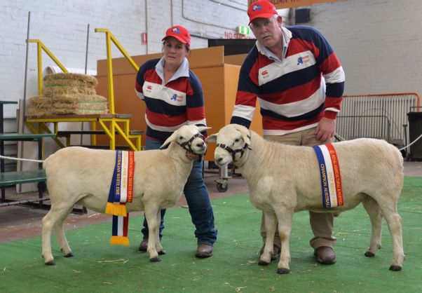 CHAMPION_AUSTRALIAN_WHITE_RAM_AND_EWE_-_ADELAIDE_ROYAL_2017_HR.JPG